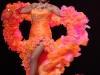 Festival Burlesque